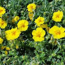 Image représentant une fleur de Back